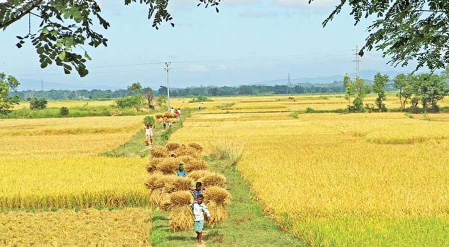 চট্টগ্রাম জেলার শস্য ভান্ডার খ্যাত রাঙ্গুনিয়ার গুমাই বিল